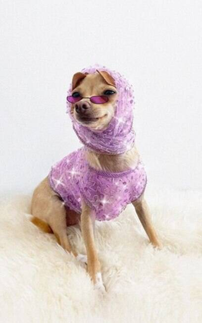 Chihuahua wearing clothes and sunglasses, lilac