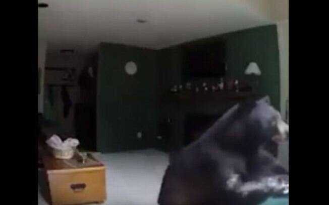 Urso invadiu casa no Colorado, Estados Unidos, e as câmeras o flagraram tocando piano